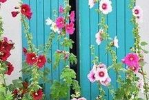Mijn nieuwe tuin / Ideeën voor mijn toekomstige tuin