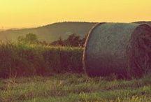 Inspiration: Rural