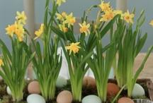 ✿ Easter ✿
