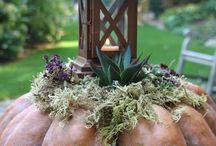 Lovely Fall / Ideas for fall, Halloween and Thanksgiving.   / by Cherrie Clarke