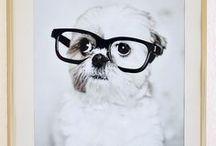 DOGS | PETS / by Tyler Dikeman