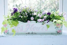 wonderful window boxes / by Kristen Ayers