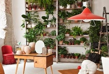 Plants Indoors / by Emily Henson / Life Unstyled