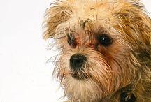 My Pet Portraits / My Pet Portraiture