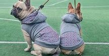 PawPawPaw Hoodies / Soft & warm. Comfortable & functional. Premium Dog Hoodies made of high-quality cotton fabric.  Easy fastening and adjustment. Detachable hood. All you need to keep your dog warm & happy.