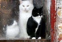 Poody Tats, Kitty Cats, Kittens / by Cherry Creek Art Studio .