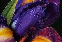 Dark Colors. / Dark Colors (adj.) . [\ˈdärk col·or z] . || Not light in color. / by Christine ♥