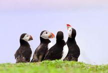 Birds of a Feather... / by Amanda Pruneda