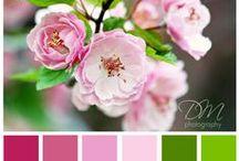 Wedding - Colour Palettes