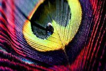 Inspiration: Nature's Colour Palate