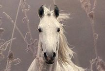 horses / by Lee Foyle