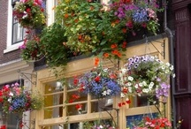 Gardens and Flowers / Flowers, Window Boxes, Herb Gardens! / by Eleanor Frye Baker