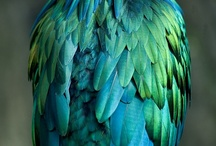 Color ❉ Turquoise, Teal, Aqua