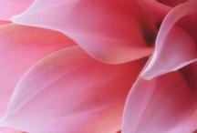 Color ❉ Pink, Fuchsia, Magenta