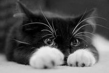 ❉ Purrrrrrr!! / Cats are the best pet