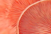 Color ❉ Orange, melon, coral