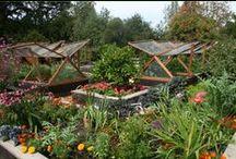 Garden: Corner Garden Project / by Jessica