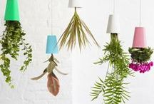 Interiors | Plants & Green Spaces / Greenery livens up any residential or commercial space | #plants #greenery #interiordesign