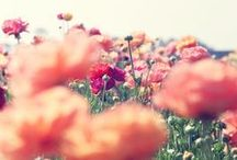"""""""Earth laughs in flowers."""""""