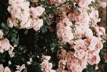 Products I Love / by Jillian Beasley