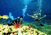 Fun Activities To Do in Hawaii
