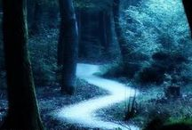 The Path Less Travelled  / Ideas for paths that lead to wondrous places to learn and explore