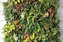 Plants / Succulents, Air plants, terrariums, mosses, nature indoors