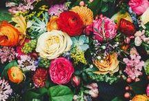 Floral | Plants
