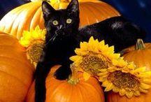 Halloween & Thanksgiving Things