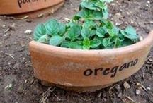 Gardening Ideas & Tips