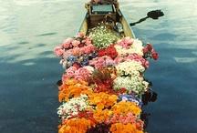 Flower Power / by Ansley Pentz