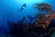 Wrecks of the Caribbean