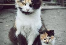 Unos Gatos