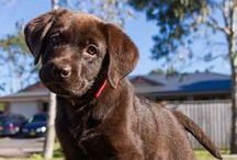 Pets Wanted / by Abbey Bonham