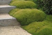 Mosses and Steppables / Why mow! With correct humidity, lighting, moss and steppables make perfect garden floors and more.