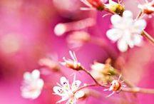 Puutarhaideoita - Gardening Tips & Ideas / Ideoita puutarhaan - Ideas for your garden