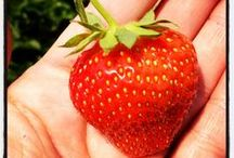 Super Strawberry Recipes / Recipes made with strawberries. I love strawberries! Fresh strawberry recipes.