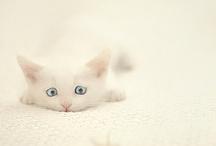 Cats / I adore