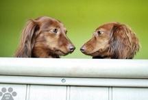 Dog Of The Day / La mayor parte de Fotografías de este tablero son sacadas de Instagram, con el Hashtag #DogOfTheDay, Cada fotografía lleva el nombre del Usuario que la tomo, porque se lo merece.
