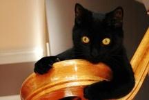 Meowza / meowmeowmeowmeowmeow because Cats are the best / by Nicole Lourette