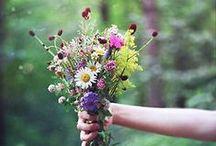 Flowers & Plants / Bouquets, wild flowers, plants, etc.