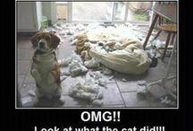 makes me laugh! / by LeAnne Tatro