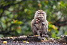 Monkeys / by Reina