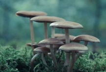 Fungi & Seeds