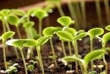 Gardening 101 ;)