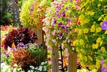 Florals Full of Color / by Teresa Powell