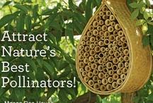 Honey & Bees / by Angela Hartman