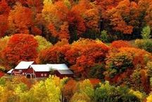 Glorious Fall / The prettiest season. / by Colleen Richardson