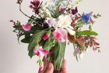 Flowers Photography / Beautiful Flowers Photography - Garden, Arrangements, Wild, Wedding