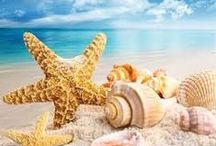 Beachin' It / Ahhh....the beach!   / by Colleen Richardson